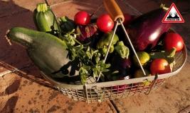 panier-quotidien-jardin-lasagne-baugnac