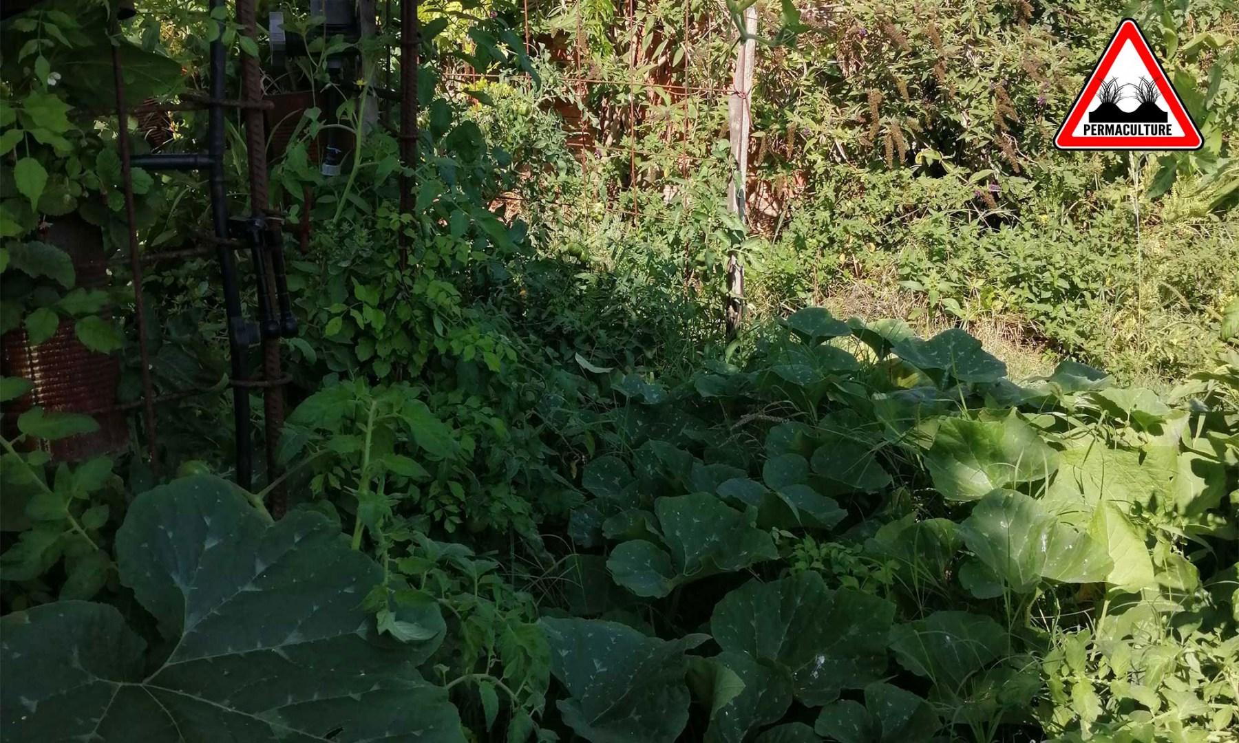jardins-verticaux-2019-de-baugnac