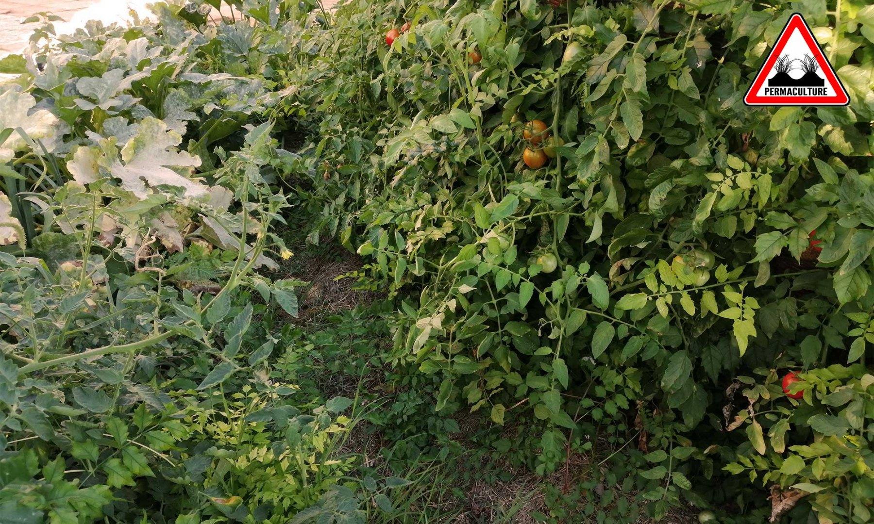 vegetalisation-jardin-lasagne-baugnac