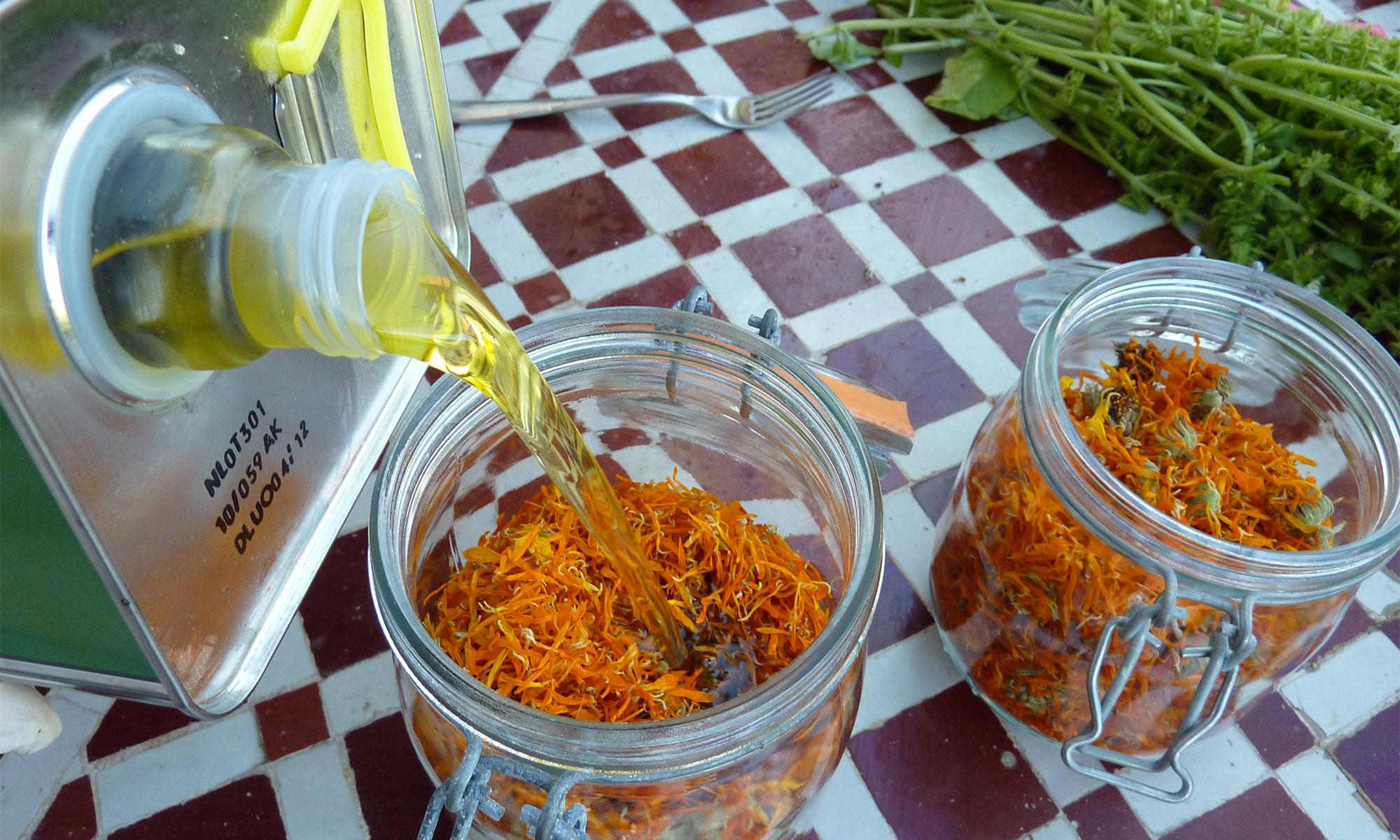 Recette de macérat aux fleurs de soucis - Les Ateliers en Herbe