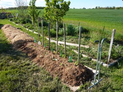 Le soleil pour le potager en Lasagne : Les Ateliers en Herbe