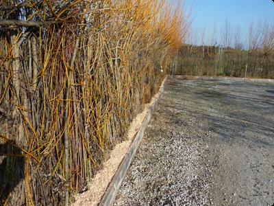 Utilisation du saule et de l\'osier au jardin potager