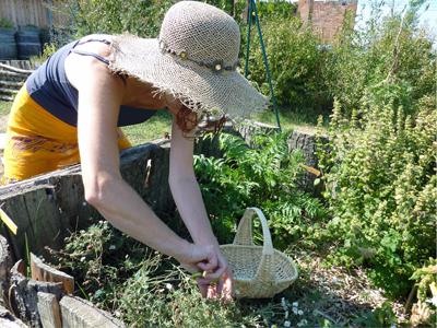 Cueillir et transformer les plantes médicinales : Les Ateliers en Herbe