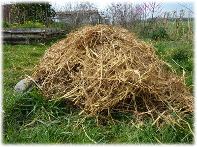 Paillage de mon champs de pomme de terre : Les Ateliers en Herbe