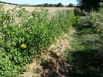 Création du potager en lasagne : Les Ateliers en Herbe