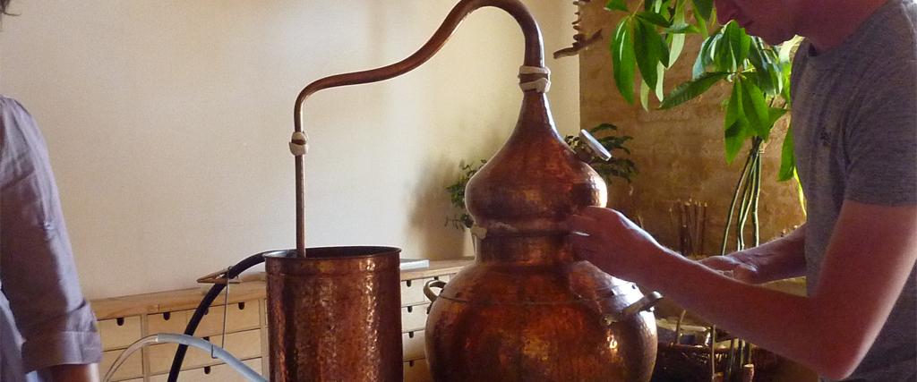 Distillation et cueillette - les Ateliers en Herbe