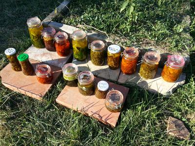 Macerats huileux : les Ateliers en Herbe