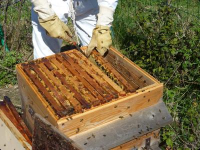 Recolte miel : les Ateliers en Herbe