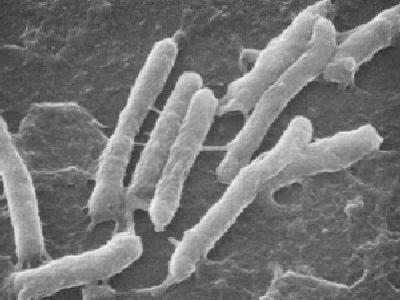 Des bactéries, vie microbienne : Les Ateliers en Herbe
