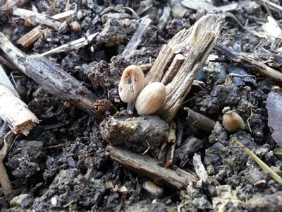 Les champignons dans la matière en décomposition : Les Ateliers en Herbe