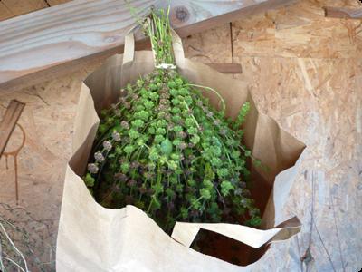 Graines en cours de séchage : Les Ateliers en Herbe