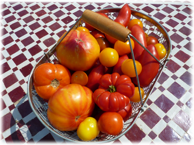 Production de tomates au Potager en Lasagne : Les Ateliers en Herbe