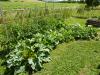 Production du potager en lasagne : Les Ateliers en Herbe