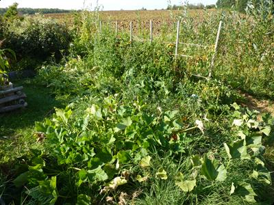 Potager en Lasagne el pleine production : Les Ateliers en Herbe