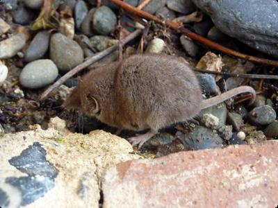 La musaraigne et le potager en Lasahne : Les ATeliers en Herbe