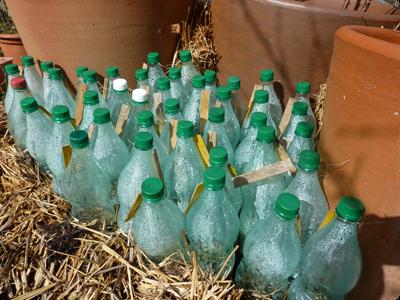 Effet de serre en bouteille : Les Ateliers en Herbe