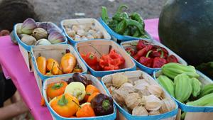 Legumes anciens et bio - Ruche Lavalette