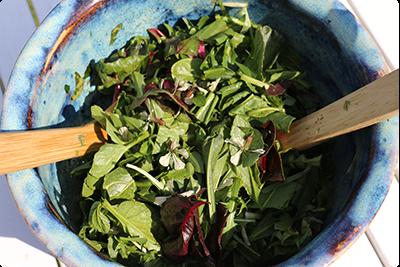 Salade sauvage de printemps : Ruche Est Toulouse