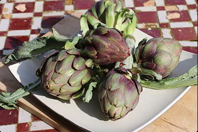 Artichauts - légume/médicament : Ruche Est Toulouse