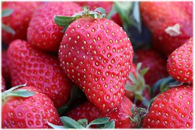 Fraises fruits et medicament : Ruche Est Toulouse