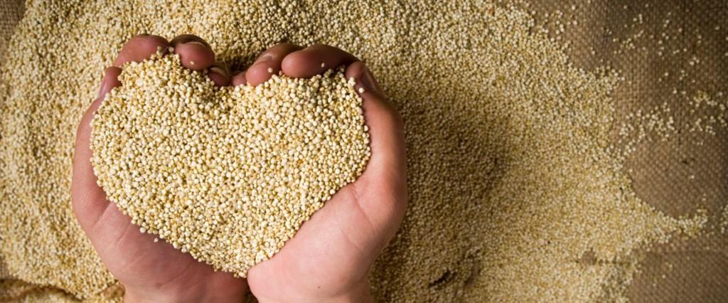 La petite graine qui fait tourner les têtes : Quinoa.