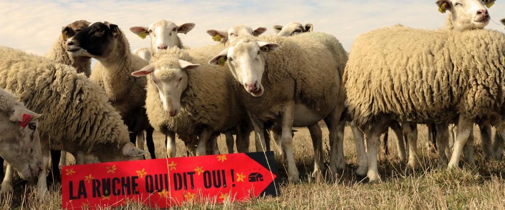 En direct des fermes de notre région : la Ruche qui dit Oui !
