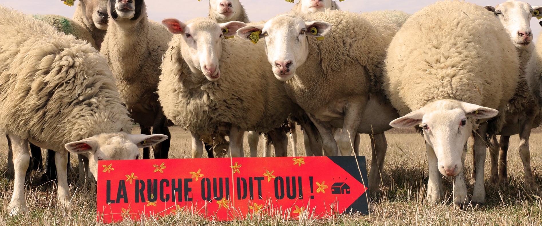 Circuit court social et solidaire avec la Ruche de Flourens