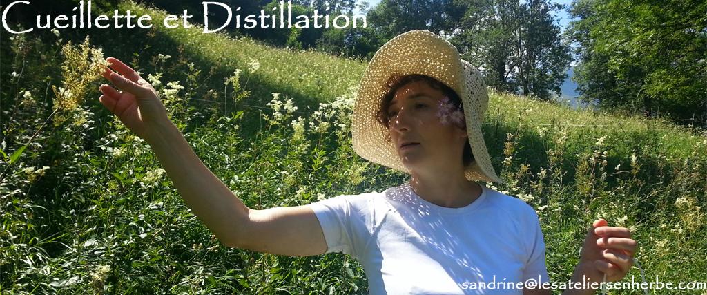 Atelier cueillette et distillation des plantes médicinales et aromatique - Les Ateliers en Herbe