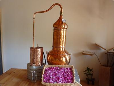 Atelier Cueillette et distillation - Les Ateliers en Herbe