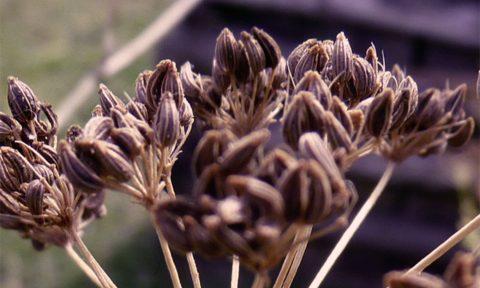 Troc au jardin et à l'Oasis ressource des Jardins de Baugnac.