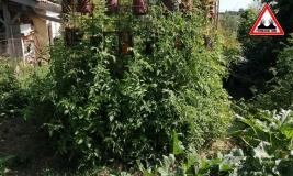 jardin-vertical-2019-bauganc
