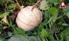 melon-jardin-lasagne-baugnac