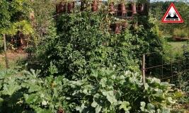 potager-lasagne-2019-jardins-de-baugnac