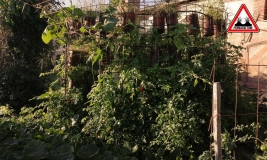vertical-jardin-lasagne-baugnac