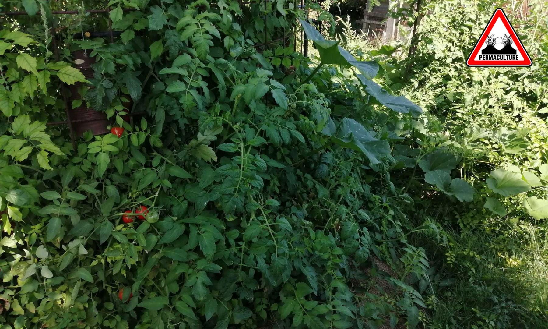 jardin-lasagne-2019-baugnac