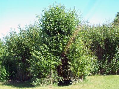 Tipi vivant en osier aux Jardins de Baugnac
