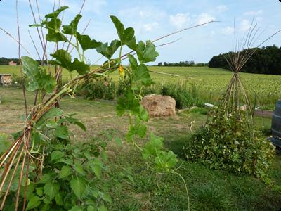 Treille en Osier aux Jardins de Baugnac