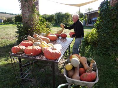 Récolte Courge et Cie au potager en Lasagne : Les Ateliers en Herbe