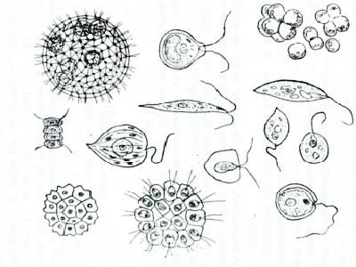 Microflore- Algues - Les Ateliers en Herbe