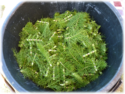 Extrait fermenté pour un kjardin naturel : Les Ateliers en Herbe