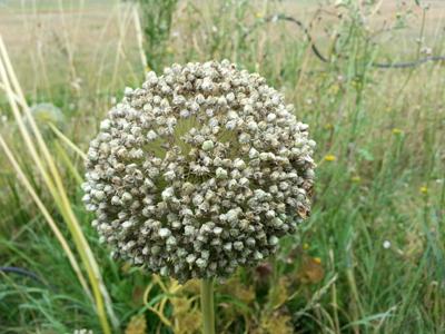 Ateliers faire se graines : Les Ateliers en Herbe