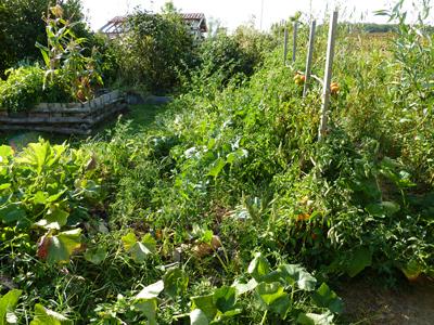 La Jungle du potager en Lasagne : Les Ateliers en Herbe