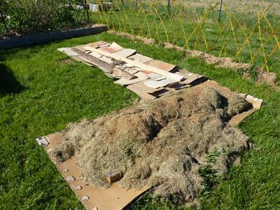 Carton au potager en Lasagne : Les Ateliers en Herbe