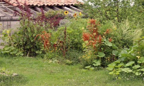 Vergé jardiné de l'Oasis ressource de Baugnac.