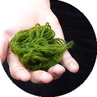 Recette teintures végétales - Les Ateliers en Herbe.